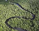 The Amazon rain forest