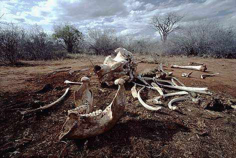 5a0fd940f ENDING ILLEGAL IVORY TRADE