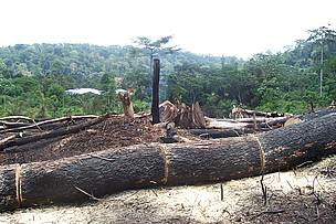 The slash and burn method, though illegal, is used by local farmers to clear forests for land ... / &copy;: Glen Asomaning/ WWF WAFPO
