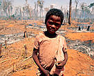 Young boy in forest burnt for cultivation, Madagascar.