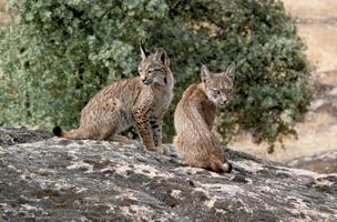 / ©: WWF Spain / Alfonso Moreno